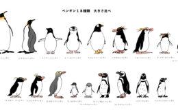 ペンギン18種類背比べ